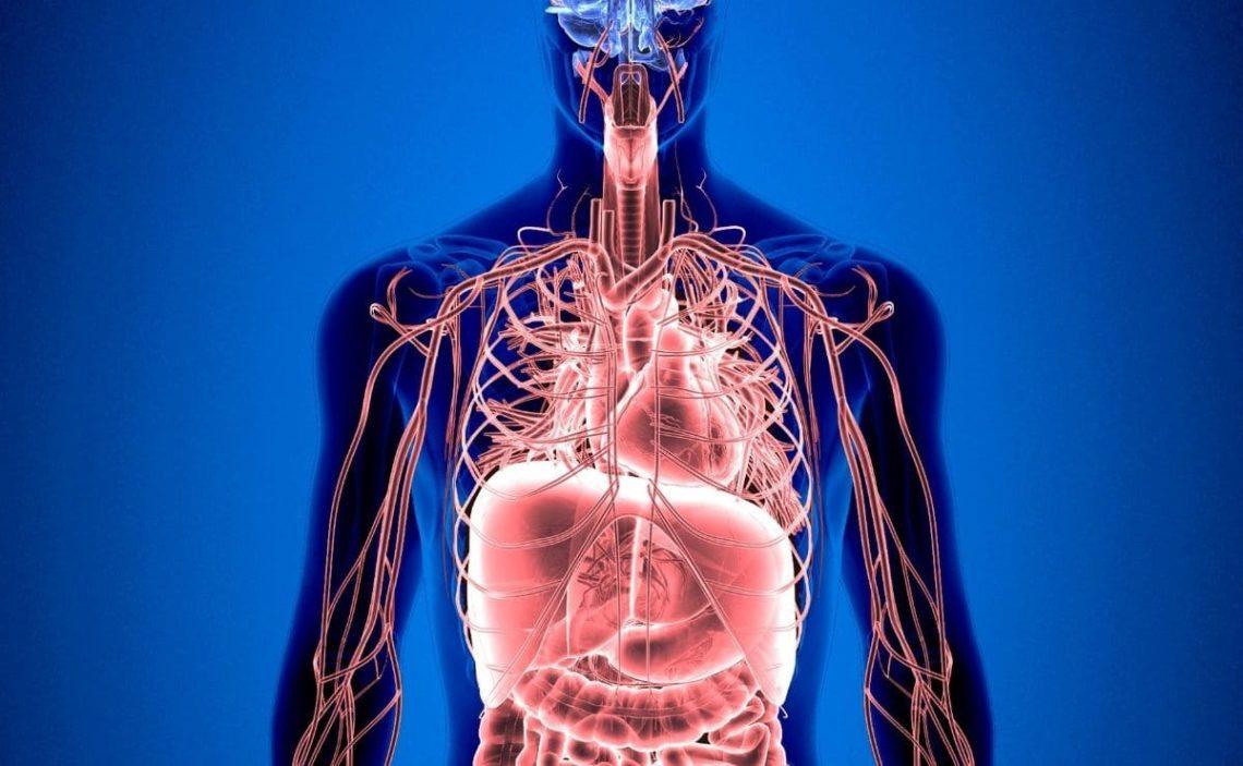 Vitamina B12 organismo