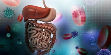 yogur flora intestinal organismo