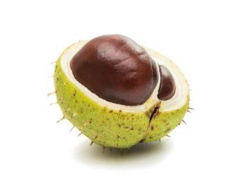 Fruto castaña piel cosmetico