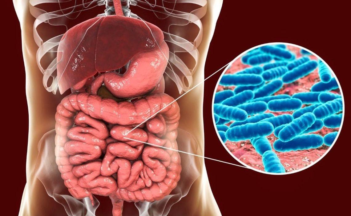 ibuprofeno intestino delgado