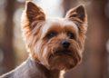 Estas son las 5 razas de perros pequeños que no crecen