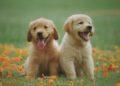 ¿Es cierto que los perros ven el mundo en blanco y negro?